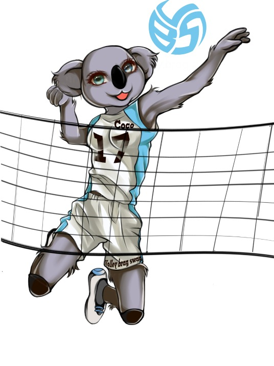 Don't let the big expressive eyes and the cute cheeks and innocent looking face fool you,  Coco the Volleybragswag Koala is a beast on the court.