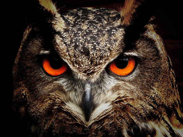An owl can hide in plain sight. Do you know any hitters like that who can be right in front of you one minute in serve receive and the next minute in attack they disappear and are somewhere else?